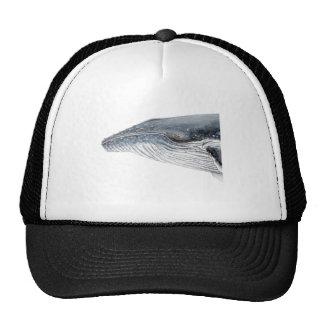 Baleine bossue - yubarta - image casquette