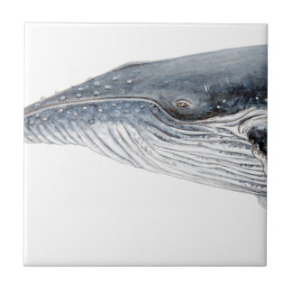 Baleine bossue - yubarta - image petit carreau carré