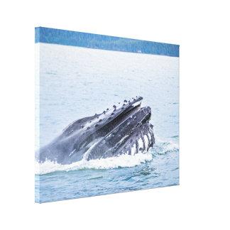 baleine de bosse en Alaska Toile