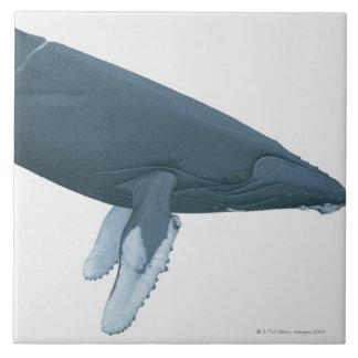 Baleine de bosse grand carreau carré
