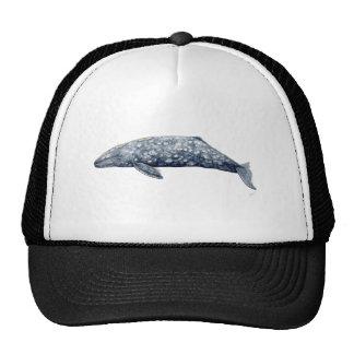 Baleine gris casquettes