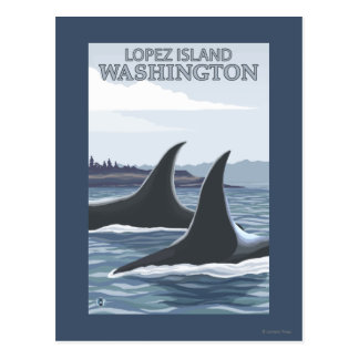 Baleines #1 - Lopez, Washington d'orque Carte Postale