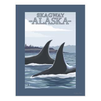 Baleines #1 - Skagway, Alaska d'orque Cartes Postales