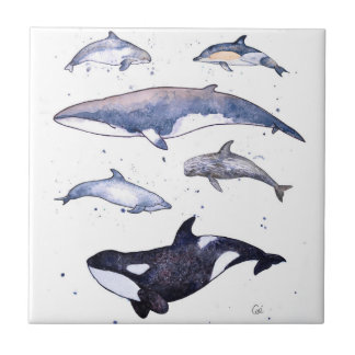 Baleines et dauphins de l'Ecosse Petit Carreau Carré