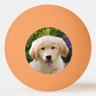 Balle De Ping Pong Photo drôle d'animal familier de chiot de chien de