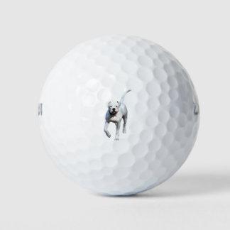 Balles De Golf Chiot américain de bouledogue