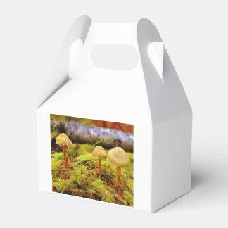 Ballotins Boîte de cadeau de photo de champignon