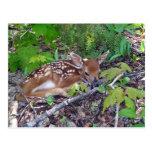 Bambi le bébé chevreuil cartes postales
