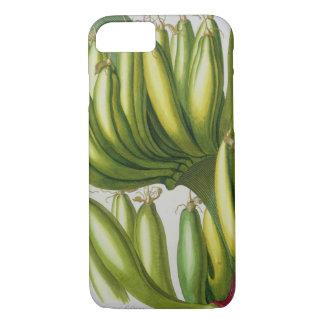 Banane, gravée par Johann Jakob Haid (1704-67) pl Coque iPhone 7