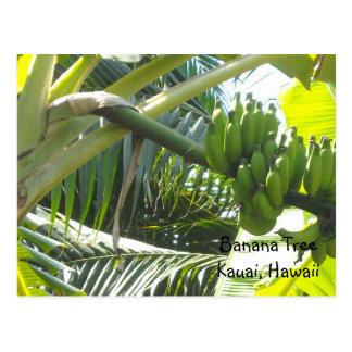Bananier Carte Postale