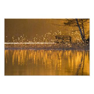 Banc isolé par le lac dans la lumière d'or impression photo