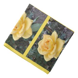 Bandana de rose jaune