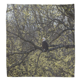 Bandana Surveillance d'Eagle Painterly