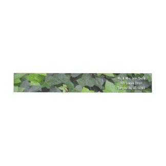 Bande Pour Adresse De Retour Copie botanique de lierre vert