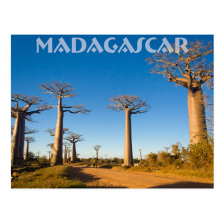 Baobabs de Madagascar Cartes Postales