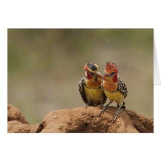 Barbet rouge et jaune mangeant des termites carte de vœux