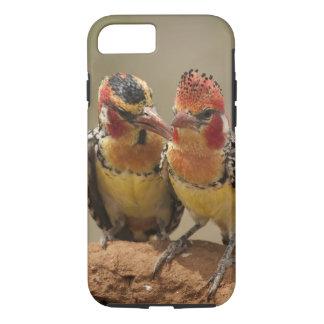 Barbet rouge et jaune mangeant des termites coque iPhone 8/7