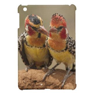 Barbet rouge et jaune mangeant des termites coque pour iPad mini
