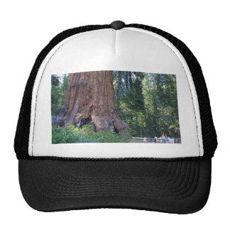 Barrières d'écorce de Forrests de séquoias Casquette Trucker
