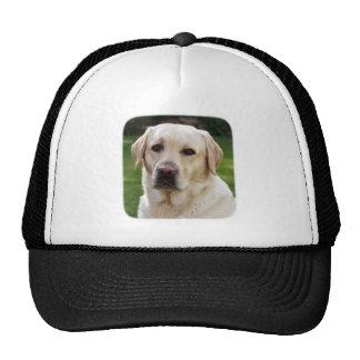 Base-ball de golden retriever/casquette de casquettes