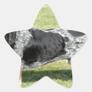 Basset Bleu de Gascogne Dog Sticker Étoile
