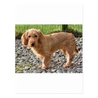 Basset Fauve de la Bretagne Dog Cartes Postales
