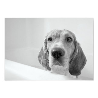 Beagle dans la baignoire carton d'invitation 8,89 cm x 12,70 cm