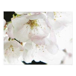 Beau blanc prospectus 21,6 cm x 24,94 cm