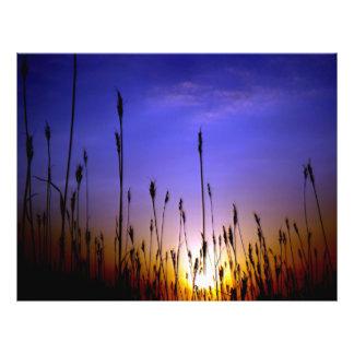 Beau champ de blé dans le coucher du soleil prospectus 21,6 cm x 24,94 cm