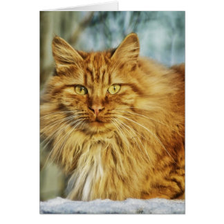 Beau chat cartes de vœux