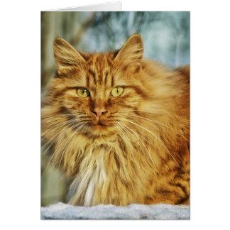 Beau chat carte de vœux