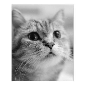 Beau chat d'animal familier prospectus 11,4 cm x 14,2 cm