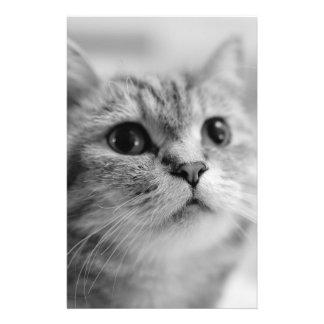 Beau chat d'animal familier prospectus 14 cm x 21,6 cm