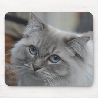 Beau chat gris avec le tapis de souris d'yeux