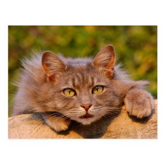 Beau chat velu en dehors de portrait carte postale