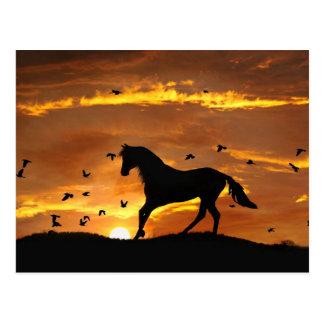 Beau cheval dans le coucher du soleil carte postale