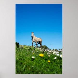 beau cheval irlandais dans un domaine poster