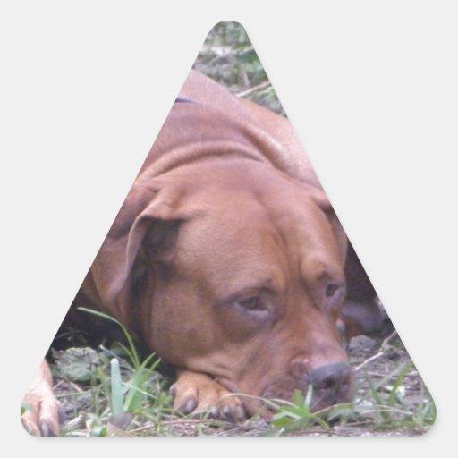 Beau chien de Taureau de Rouge-Nez Autocollant En Triangle