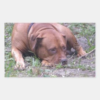 Beau chien de Taureau de Rouge-Nez Autocollant En Rectangle