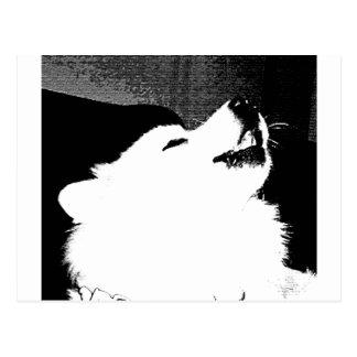 Beau chien velu de blanc de Samoyed Cartes Postales