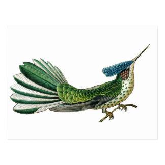 Beau joli oiseau d'image de paradis cartes postales