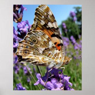 Beau papillon avec la photo colorée d'ailes posters