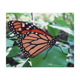 Beau papillon de monarque toiles