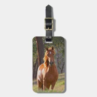 Beau portrait de photo de cheval de châtaigne, cad étiquettes bagages