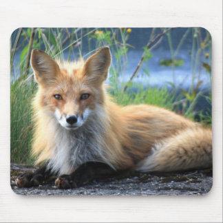 Beau portrait de photo de renard rouge, cadeau tapis de souris