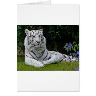Beau repos blanc de chat de tigre du Bengale Carte De Vœux