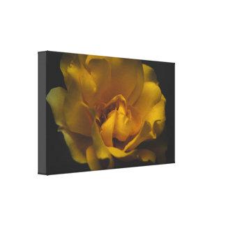 Beau rose jaune toiles