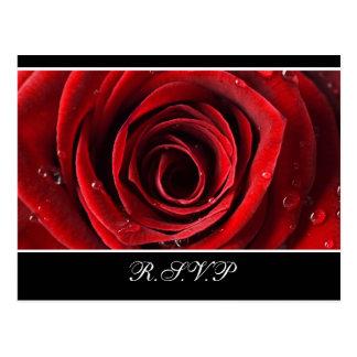 Beau rose rouge épousant RSVP - noir Carte Postale