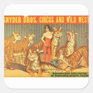 Beaucoup choient des tigres sticker carré