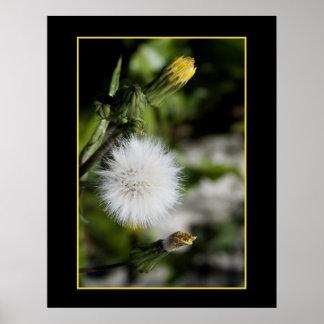 Beauté dans les allergies ! poster